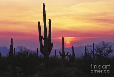Photograph - Sunset Glory by Sandra Bronstein