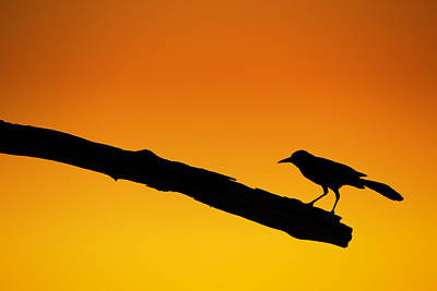 Wood Photograph - Sunset Grackle Silhouette by Andres Leon