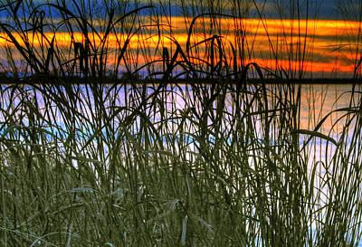 Photograph - Sunset Grass by Pete Federico