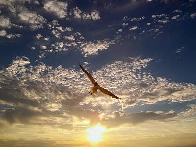 Sunset Gull Print by Lora Simmons