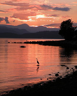 Photograph - Sunset Heron by Brian Chase