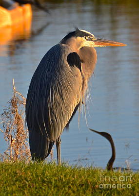 Photograph - Sunset Heron by Carol  Bradley