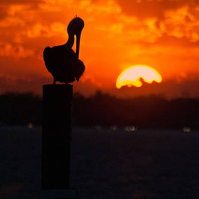 Photograph - Sunset Pelican by George Taylor