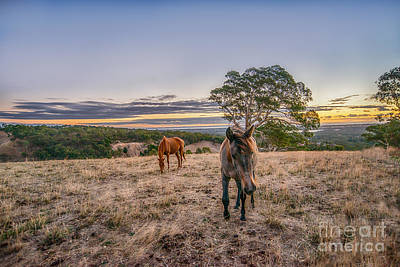 Photograph - Sunset Horses by Ray Warren