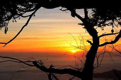 Sunset In A Tree Frame Art Print
