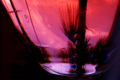 Photograph - Sunset In A Wine Glass by Jean Wright
