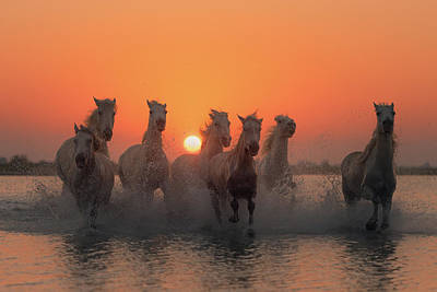 Running Horses Photograph - Sunset In Camargue by Rostovskiy Anton