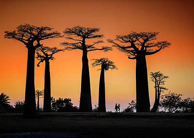 Travel Photograph - Sunset In Morondava by Raymond Ren Rong