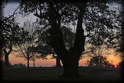 Sunset In Richmond Park Art Print