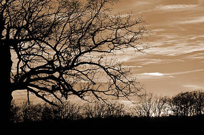 Photograph - Sunset In Sepia C  by Jeanne May