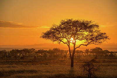 Photograph - Sunset In Serengeti National Park by Tom Murphy