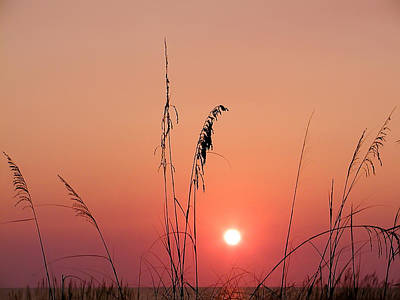 Sunset In Tall Grass Art Print by Bill Cannon