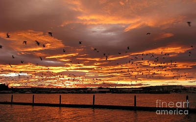 Sunset In Tauranga New Zealand Art Print