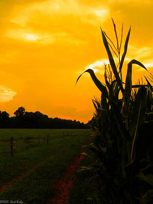 Photograph - Sunset In The Cornfield by Nick Kirby