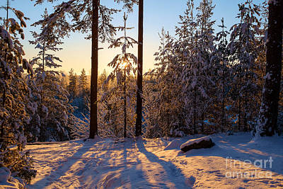 Photograph - Sunset In The Frosty Forest by Ismo Raisanen