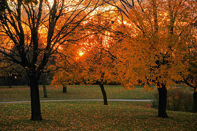 Photograph - Sunset In The Park by Dragan Kudjerski