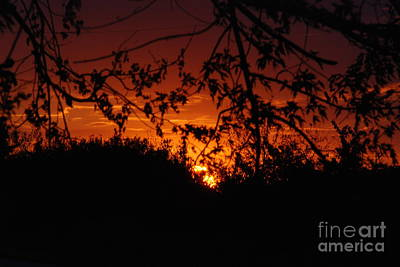 Photograph - Sunset In The Trees by Mark McReynolds