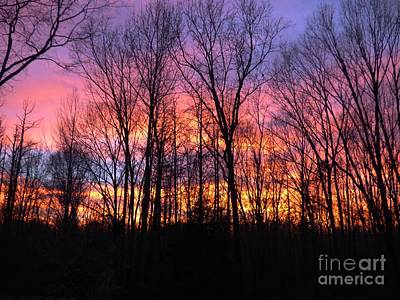 Photograph - Sunset In The Woods by Jean Wright