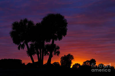 Photograph - Sunset In West Palm Beach In Florida by Les Palenik