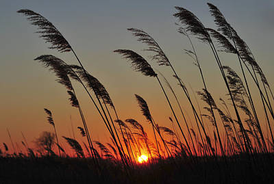 Photograph - Sunset Island Beach State Park Nj by Terry DeLuco
