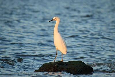 Photograph - Sunset Island by Mandy Shupp