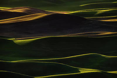 Green Shades Photograph - Sunset Light by Lydia Jacobs