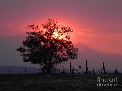 Photograph - Sunset by Michelle Frizzell-Thompson