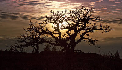 Photograph - Sunset Oak by Jon Ares