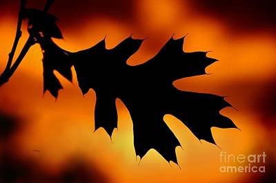 Photograph - Sunset Oak Leaf by Patrick Witz