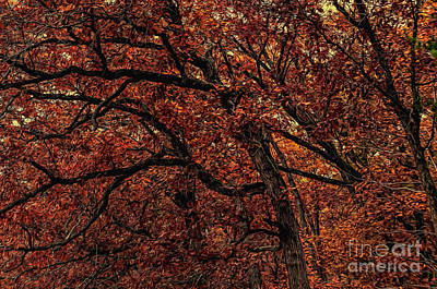 Sunset Oaks 2 Art Print