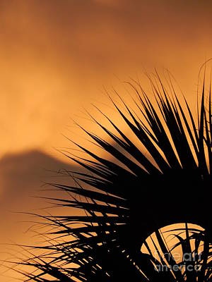 Photograph - New Orleans Sunset Of The Oasis In The Sky Of Louisiana by Michael Hoard