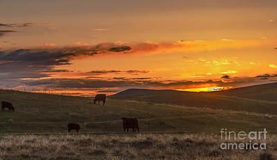 Photograph - Sunset On Open Range by Robert Bales
