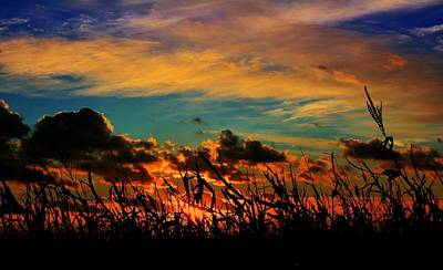 Sunsets Photograph - Sunset On The Corn by Miss Judith