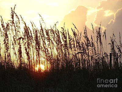 Sunset On The Dunes St. Augustine Art Print