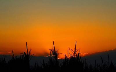 Cornfield Photograph - Sunset On The Farm by Dan Sproul