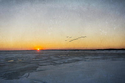 Little Mosters - Sunset On The Frozen Bay by Cathy Kovarik