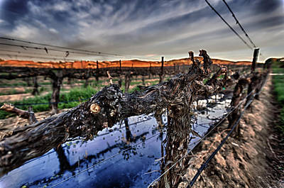 Blue Grapes Photograph - Sunset On The Vine by Scott Campbell