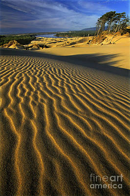 Photograph - Sunset Oregon Dunes National Recreation Area Oregon by Dave Welling