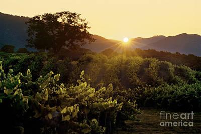 Sunset Over Carmel Valley Vineyard Art Print