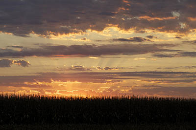 Photograph - Sunset Over Corn by Jane Eleanor Nicholas