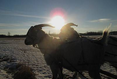 Photograph - Sunset Over Harness Goats by Ishana Ingerman