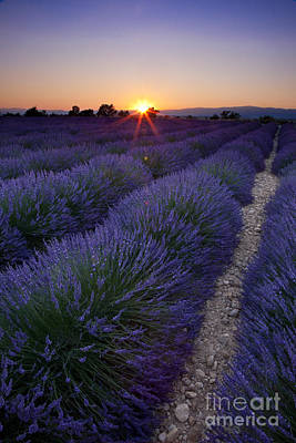 Photograph - Sunset Over Lavender by Brian Jannsen