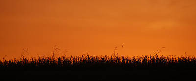Photograph - Sunset Over Soybeans by Peg Toliver