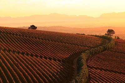 Sunset Over The Vineyards Art Print