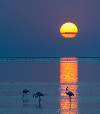 Fauna Painting - Sunset Over Walvis Bay - Flamingo Silhouette Photograph by Duane Miller