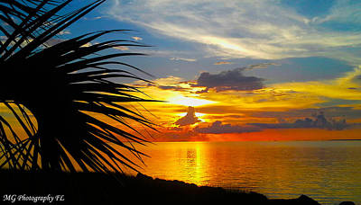 Photograph - Sunset Palm by Marty Gayler