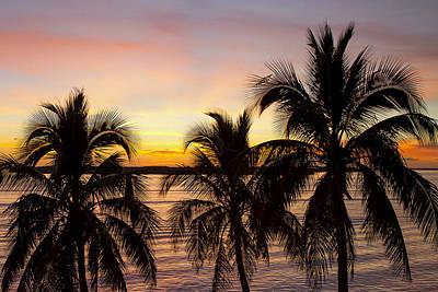 Photograph - Sunset Palm by Sean Allen