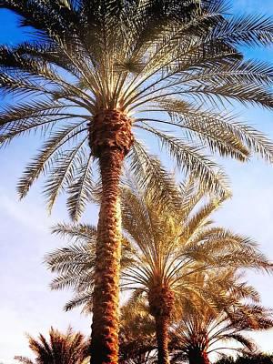 Target Threshold Photography - Sunset Palms by Anna Kohler