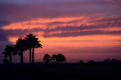 Photograph - Sunset Palms II by DigiArt Diaries by Vicky B Fuller