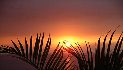 Photograph - Sunset Palms by Karen Nicholson